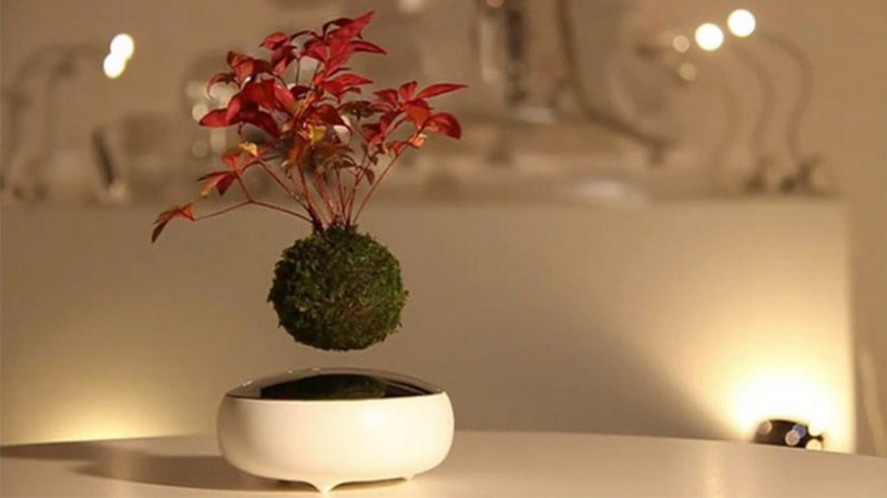 Design and sell floating plants & bonsai