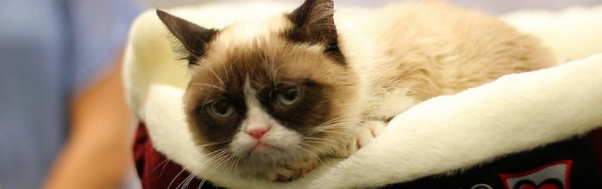 Grumpy cat Internet sensation